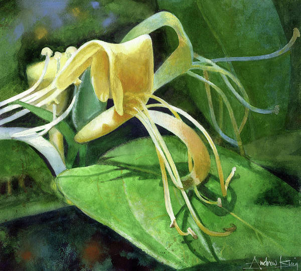 Painting - Honeysuckle Shade by Andrew King
