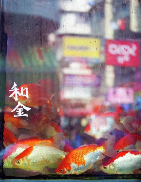 Hongkong Photograph - Hong Kong Goldfish by Agnes Czekman