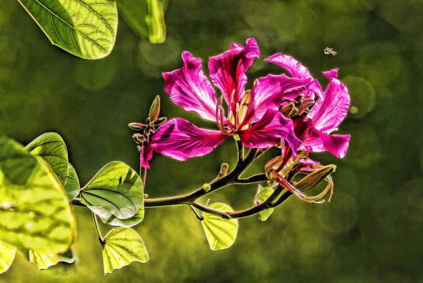 Hong Kong Orchid Photograph - Hong Kong Orchid Blossom by HH Photography of Florida