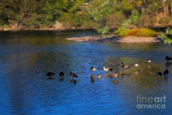 Photograph - Honkers by Jon Burch Photography