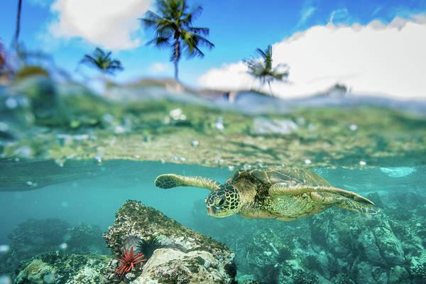 Turtle Photograph - Honu Palm by Drew Sulock