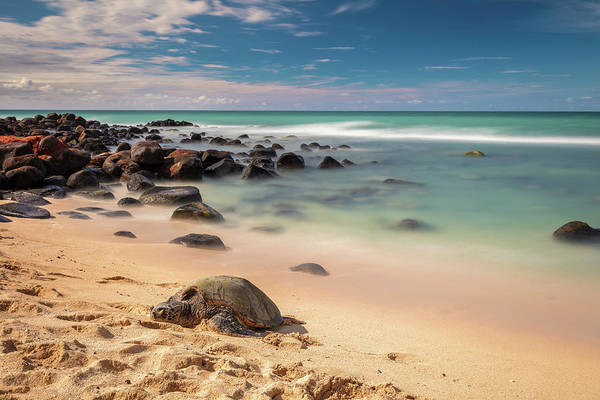 Photograph - Honu Sleeping At Baby Beach by Pierre Leclerc Photography