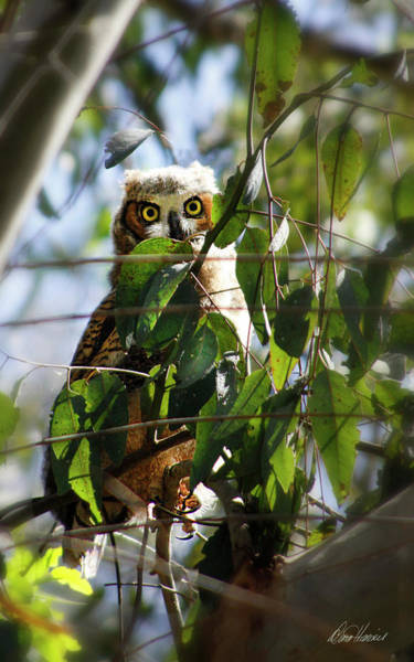 Photograph - Hoo Goes There? by Diana Haronis