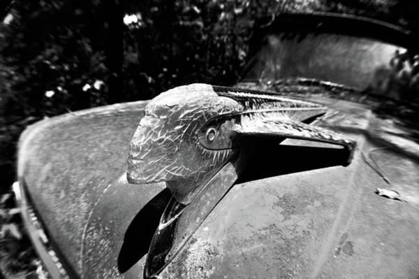 Photograph - Hood Ornament Detail by Matthew Mezo