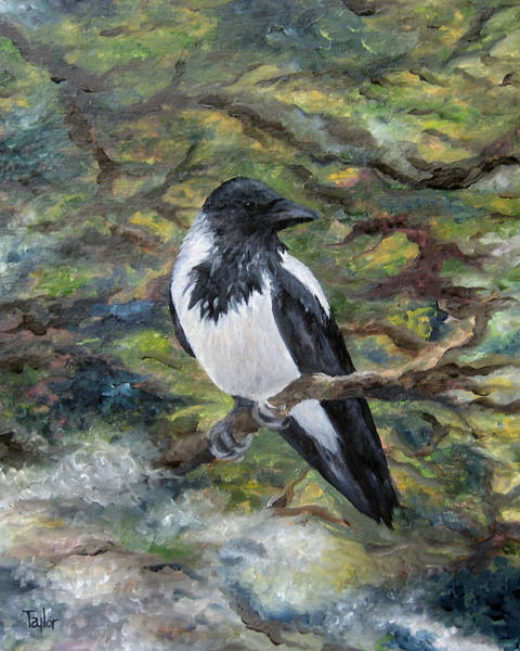Painting - Hooded Crow by FT McKinstry