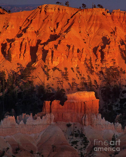 Photograph - Hoodoos Glow In Sunset Light Bryce Canyon National Park Utah by Dave Welling