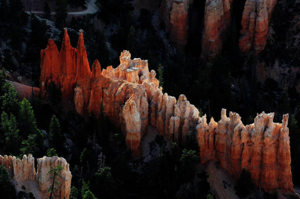 Photograph - Hoodoos Of Bryce Canyon by David Lunde