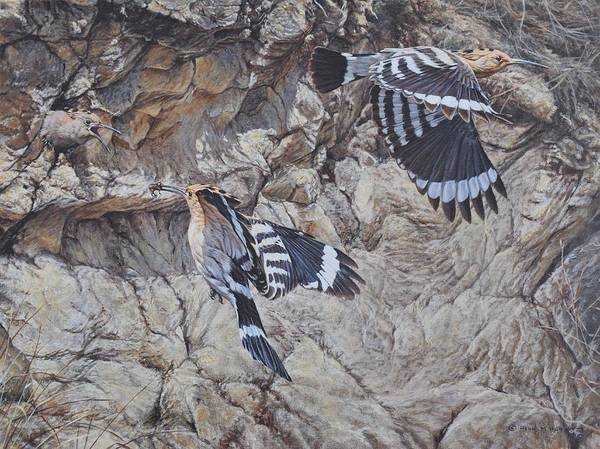 Painting - Hoopoes Feeding by Alan M Hunt