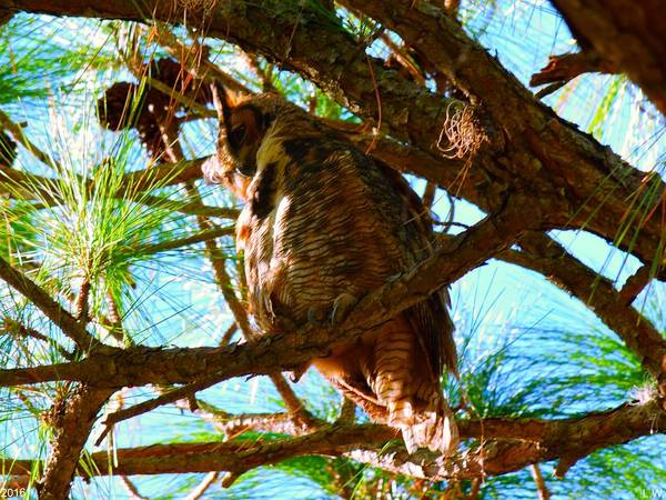 Photograph - Hoot Do I See Down There by Lisa Wooten