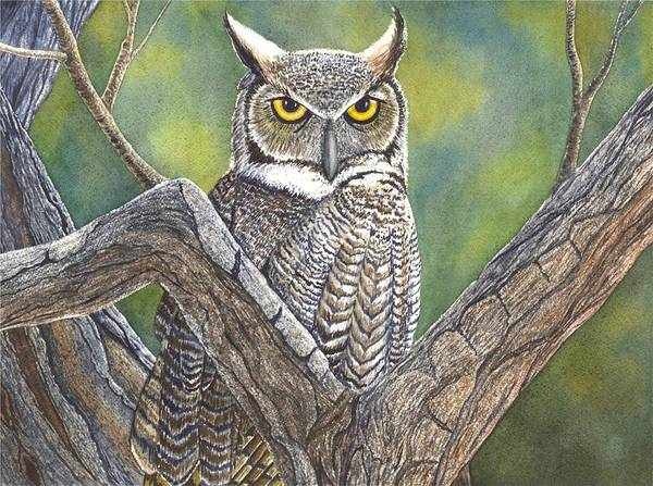 Painting - Hooter by Catherine G McElroy