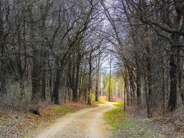 Photograph - Hope In A Dark Forest by Lynn Hansen