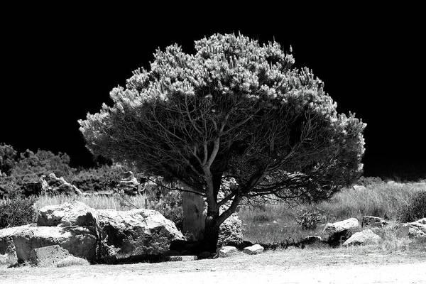 Photograph - Hope by John Rizzuto