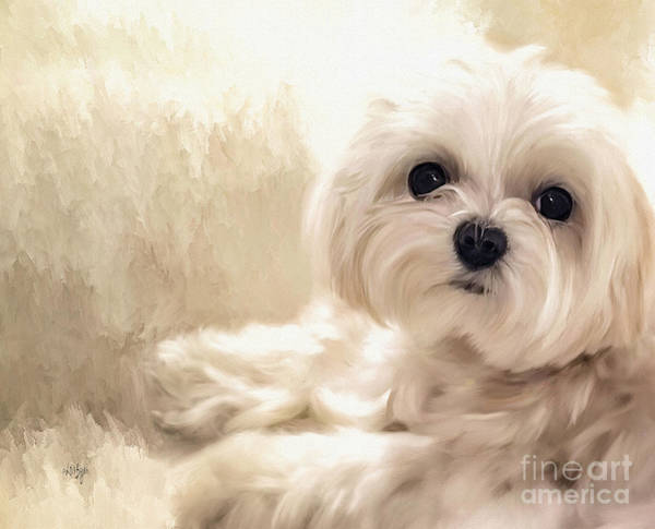 Furry Digital Art - Hoping For A Cookie by Lois Bryan