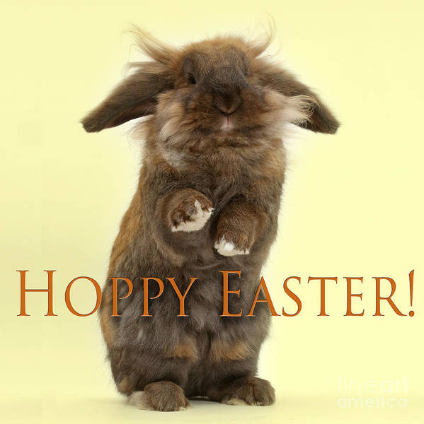 Photograph - Hoppy Easter by Warren Photographic