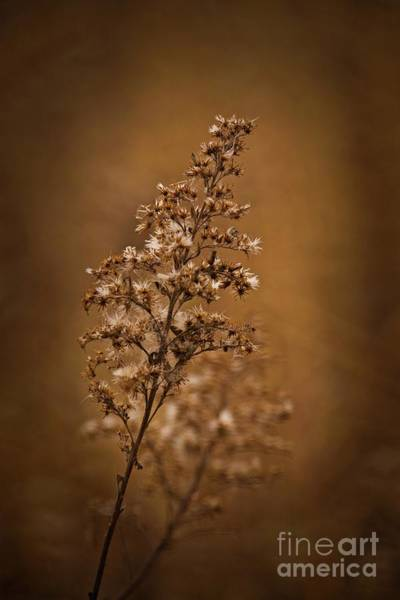 Wall Art - Photograph - Horicon Marsh - Wildflower Golden Glow by Mary Machare