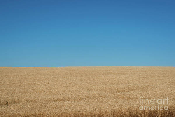 Photograph - Horizon  by Michael Ver Sprill