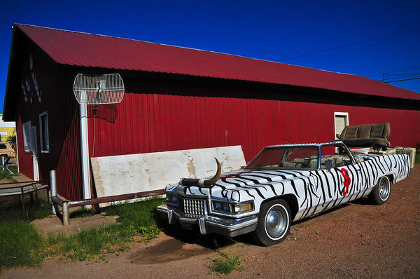 Photograph - Horn Dog by Skip Hunt
