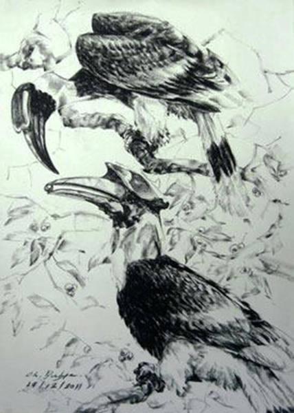Hornbill Drawing - Hornbill  by Chaitawee Bubpa