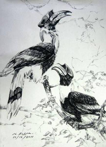 Hornbill Drawing - Hornbills by Chaitawee Bubpa