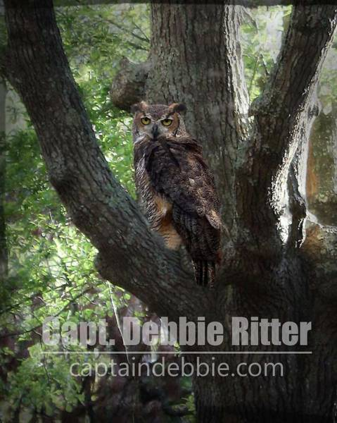 Photograph - Horned Owl 7059 by Captain Debbie Ritter