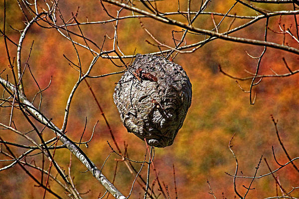 Empty Nest Wall Art - Photograph - Hornet's Nest by HH Photography of Florida