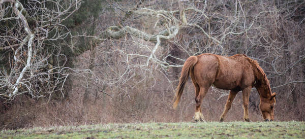 Photograph - Horse 2 by Karen Saunders