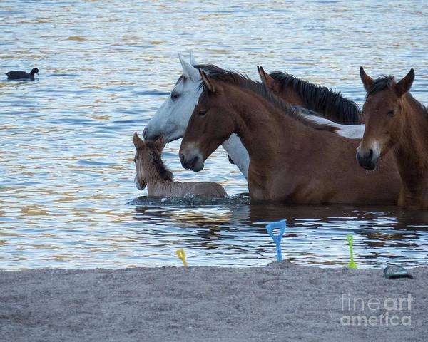 Horse 6 Art Print