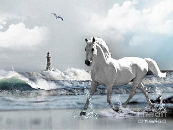 Photograph - Horse At Roker Pier by Morag Bates