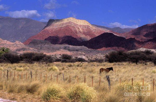 Photograph - Horse And Cerro Yacoraite Argentina by James Brunker