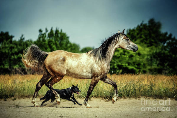 Photograph - Horse And Dog by Dimitar Hristov
