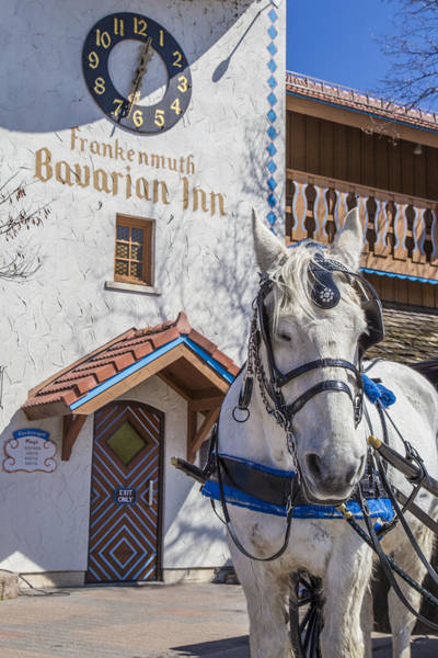 Frankenmuth Photograph - Horse And Frankenmuth Michigan by John McGraw