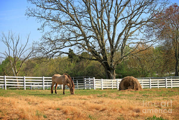 Photograph - Horse And Hay by Todd Blanchard