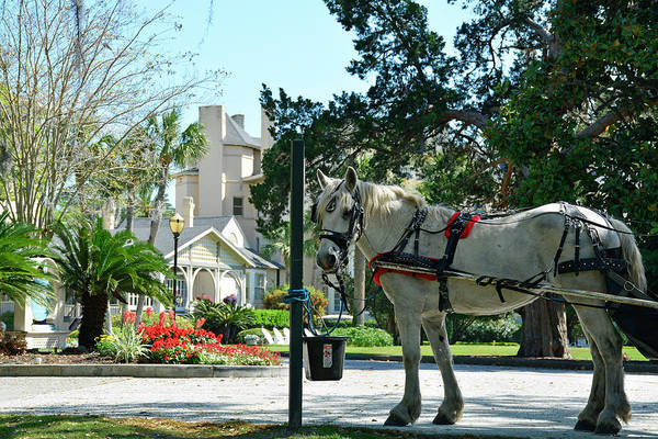 Photograph - Horse And Jekyll Lsland Club Hotel by Bruce Gourley