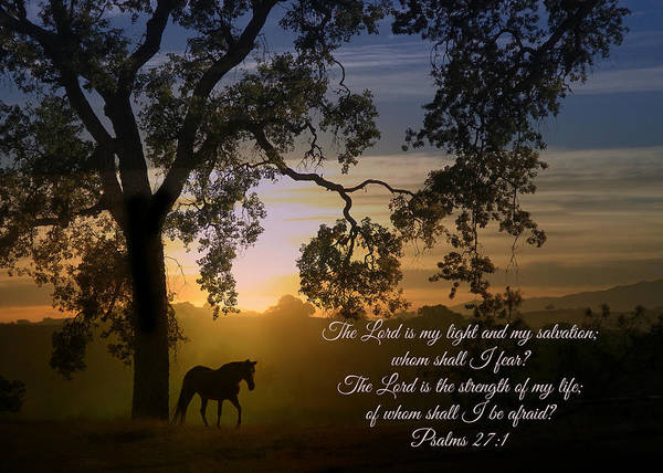 Psalms Photograph - Horse And Oak Tree Bible Verse Psalms 27 The Lord Is My Light by Stephanie Laird