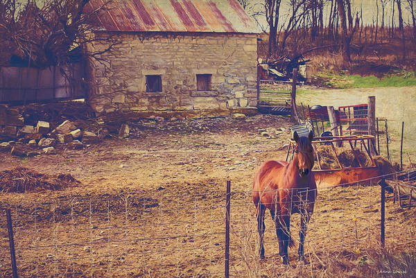 Photograph - Horse And Old Stone Barn by Anna Louise