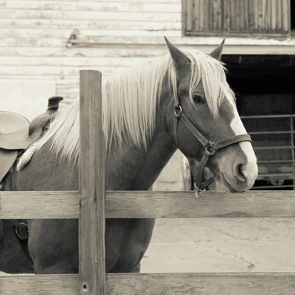Wall Art - Photograph - Horse Art by Lucid Mood