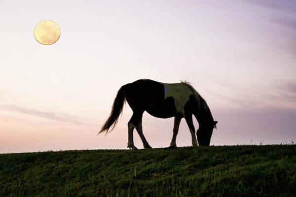 Photograph - Horse by Artistic Panda