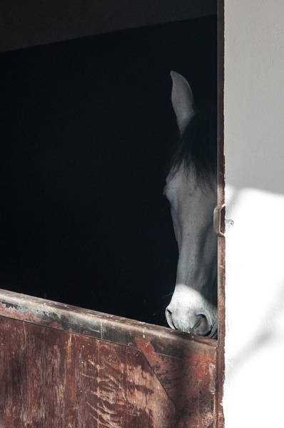 Photograph - Horse At A Bull Ring by NaturesPix