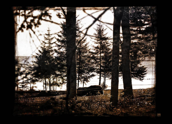 Photograph - Horse At Spruce Head by John Meader