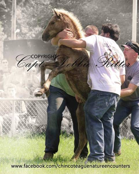 Photograph - Horse Auction Palomino Foal by Captain Debbie Ritter
