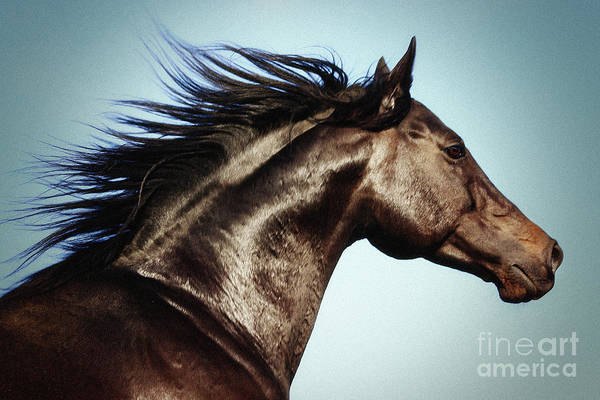 Photograph - Horse Beauty by Dimitar Hristov
