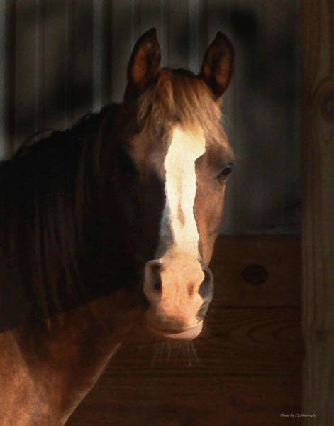 Photograph - Horse by Coleman Mattingly