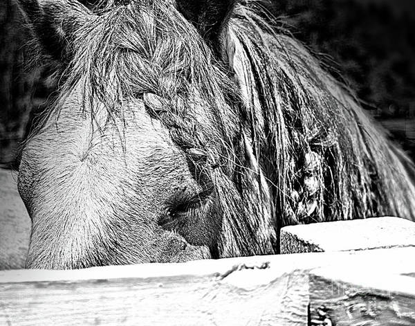 Photograph - Horse Contentment by Smilin Eyes  Treasures