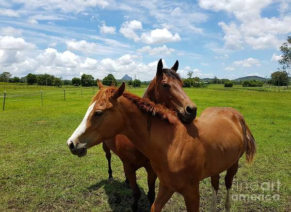 Photograph - Horse Cuddles by Cassy Allsworth