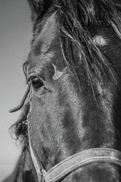 Photograph - Horse Drama by Kristopher Schoenleber
