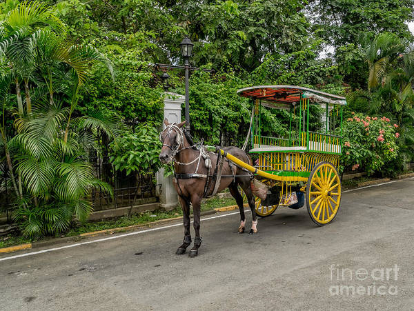 Carriage Photograph - Horse Drawn by Adrian Evans