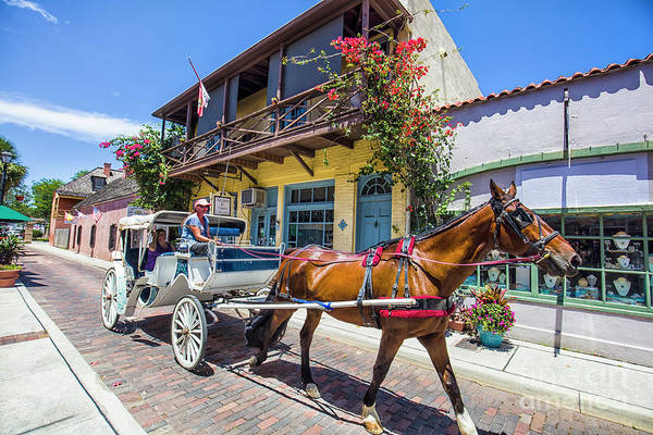 Flagler Photograph - Horse Drawn Carriage, St. Augustine, Florida by Felix Lai