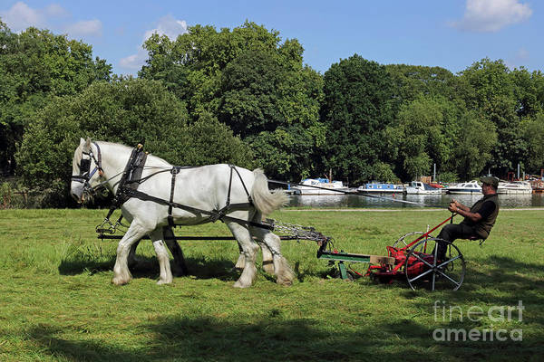 Photograph - Horse Drawn Grass Cutter by Julia Gavin