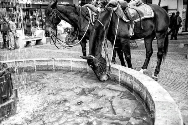 Photograph - Horse Drink In Santiago Chile by John Rizzuto