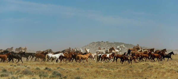 Wall Art - Photograph - Horse Drive by Pamela Steege